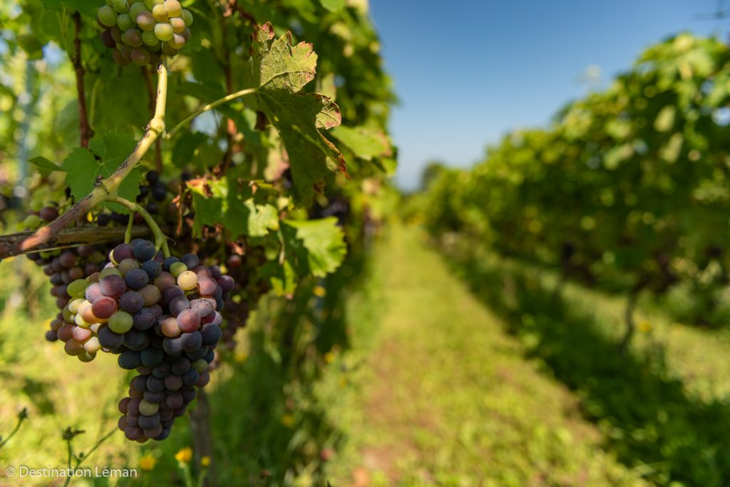 Go on the wine route